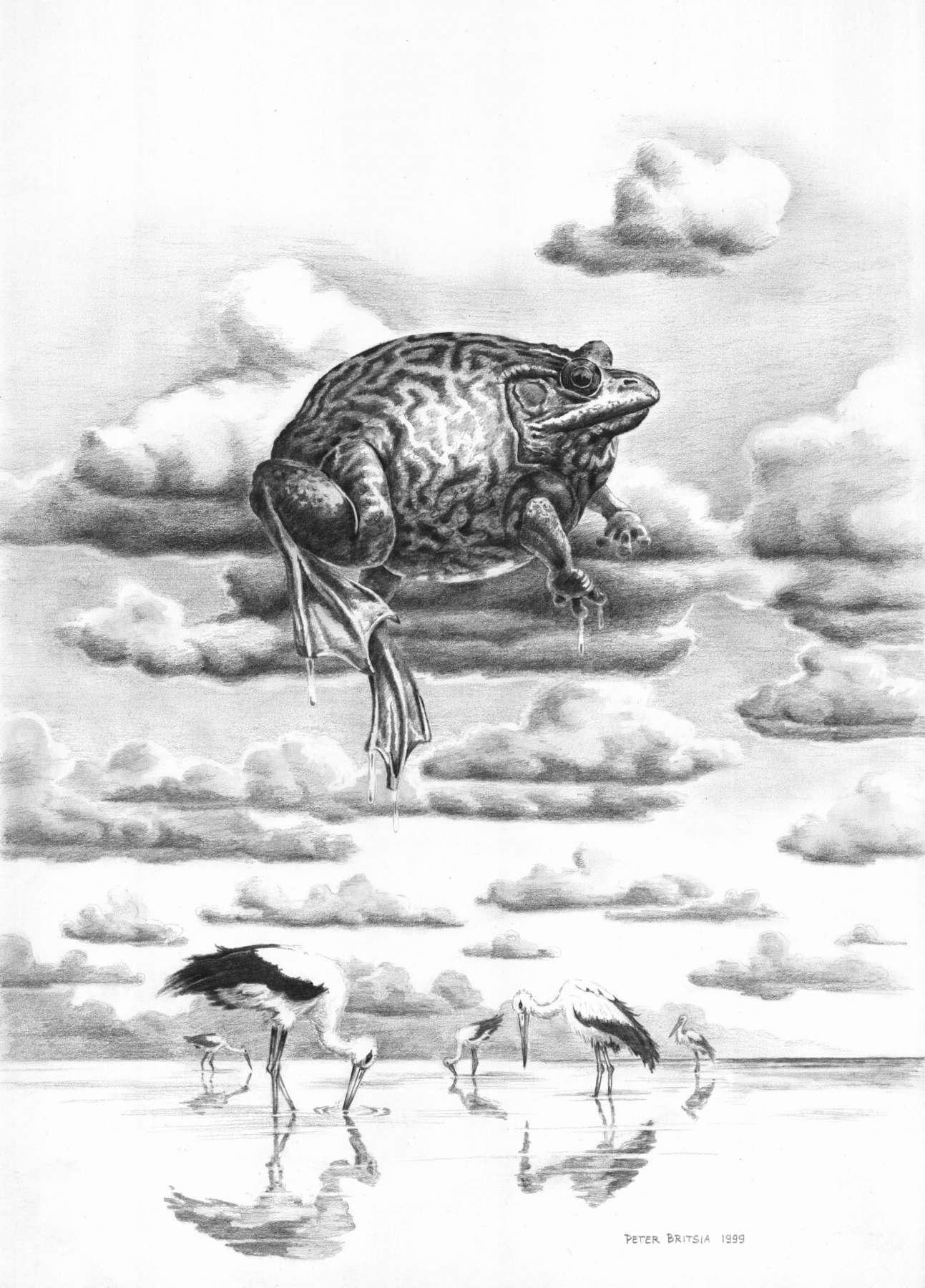 Opkikker - potloodtekening<br>De ooievaars zijn ijverig op zoek naar lekkere kikkerhapjes in het water, maar alles wat ze doen is pikken in hun eigen spiegelbeeld.