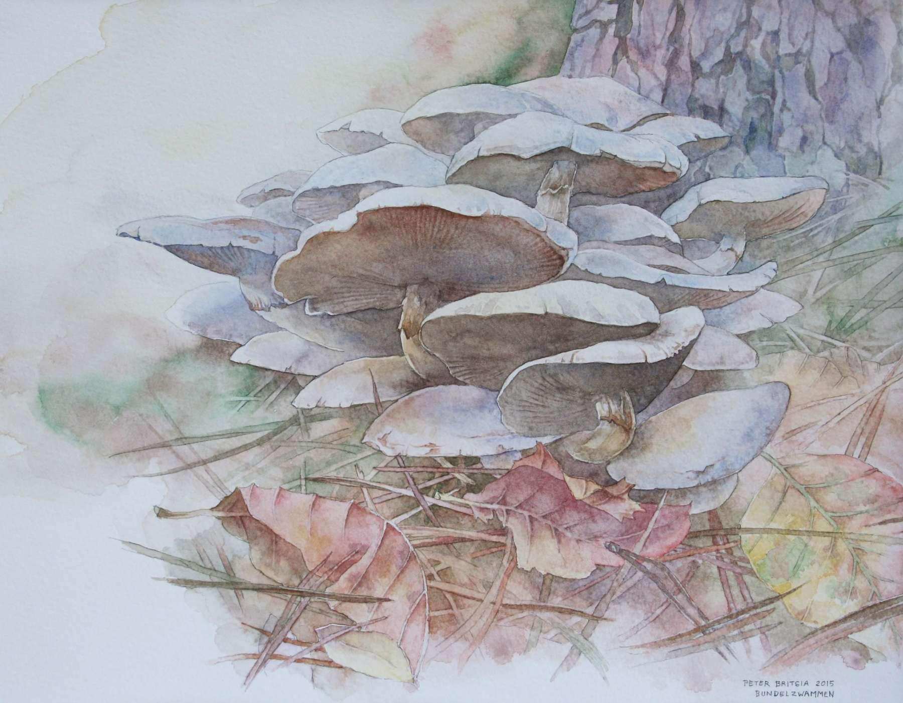 Bleekgele bundelzwammen - aquarel 40 x 30 cm.