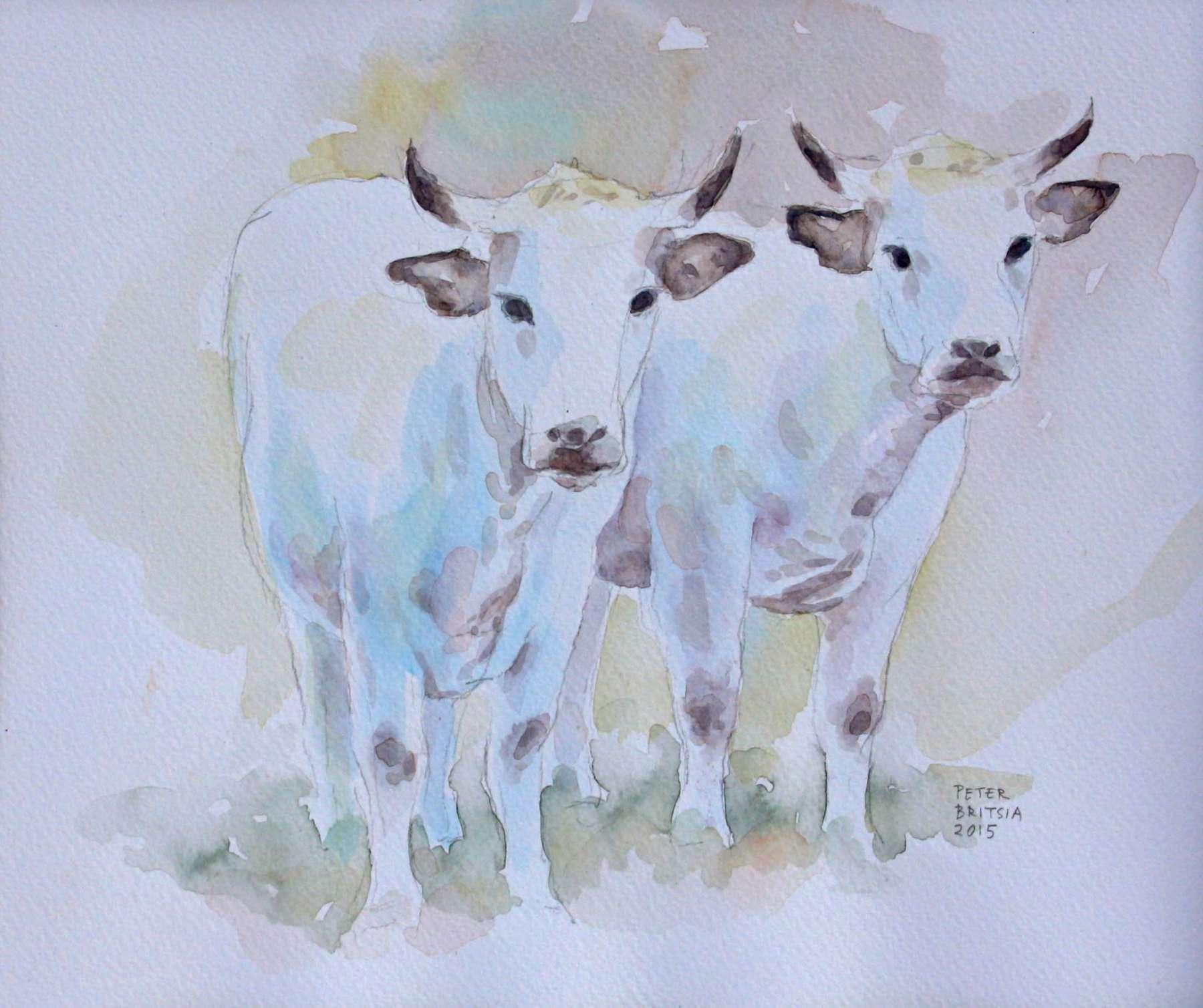 Witte koeien – aquarel - 25 x 18 cm