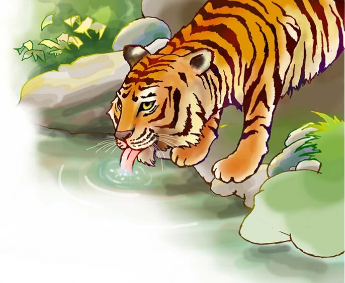 De tijger - De Kijkdoos N 141 - basiseducatie Noordhoff Uitgevers