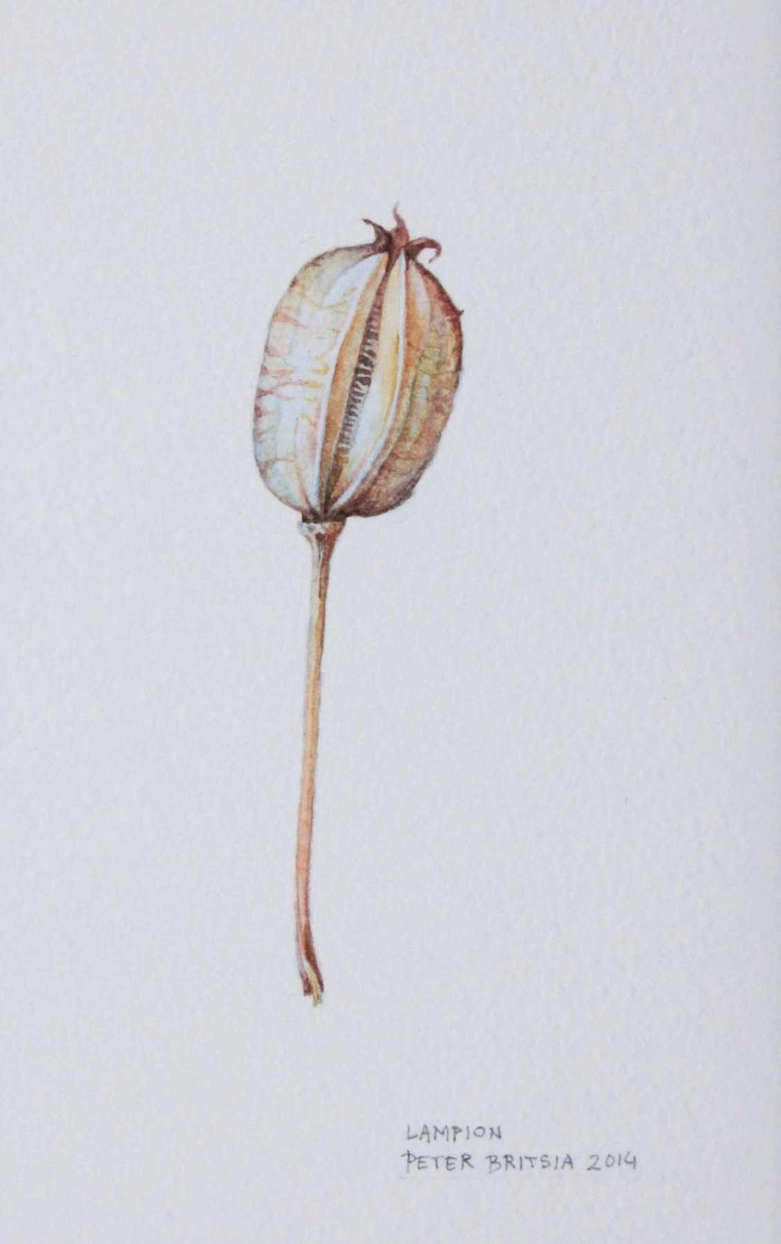 Lampion - aquarel 6 x 11 cm.