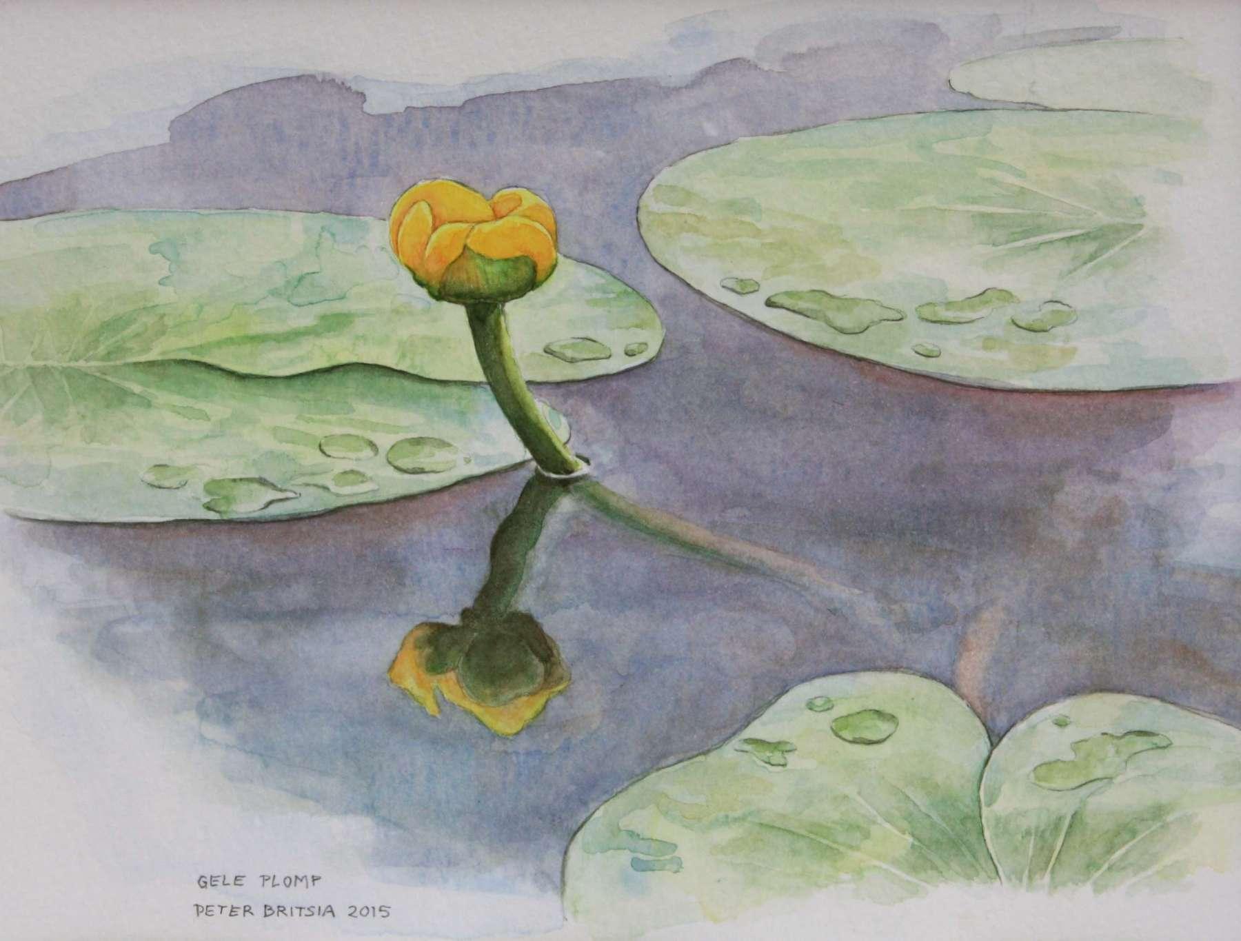 Gele plomp - aquarel - 20 x 15 cm.