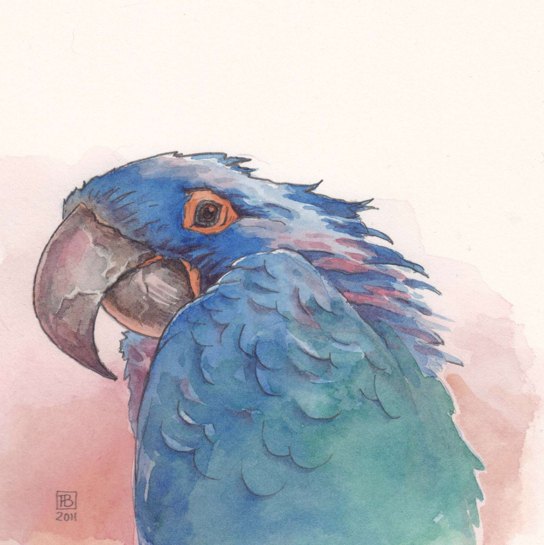 Amazone papegaai - aquarel 12 x 12 cm.